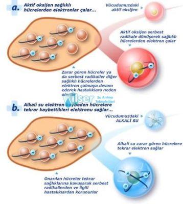 Biocera Antioksidan Alkali Su Sürahisi (2 kartuş içinde)